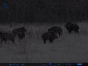 Ночная зимняя охота в охотхозяйстве